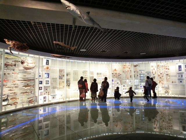 CASIO カシオ EXILIM エクシリム EX-TR100 TRYX 撮影サンプル 国立科学博物館