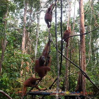 Orangutan World, Tanjung Puting Borneo Adventure-88.jpg | by OURAWESOMEPLANET: PHILS #1 FOOD AND TRAVEL BLOG