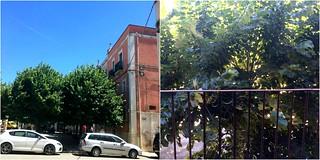 Gli alberi di Piazza Moro. A destra la vista dal balcone di Chiara