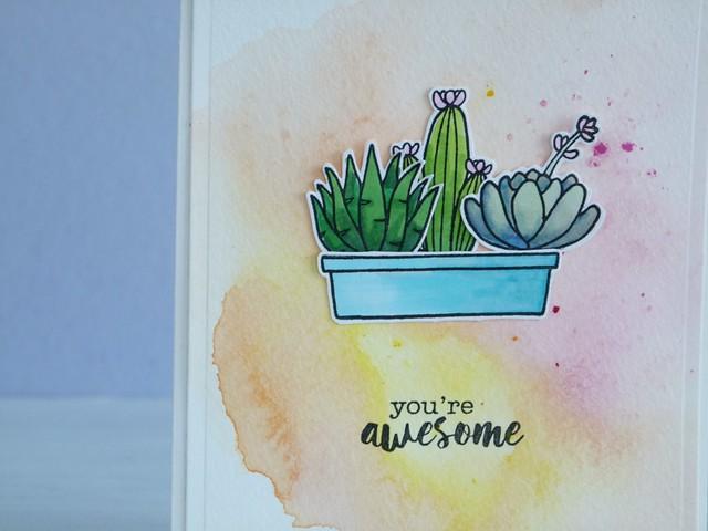 Cactus 2/1