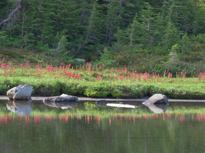 Paintbrush along Russell Lake