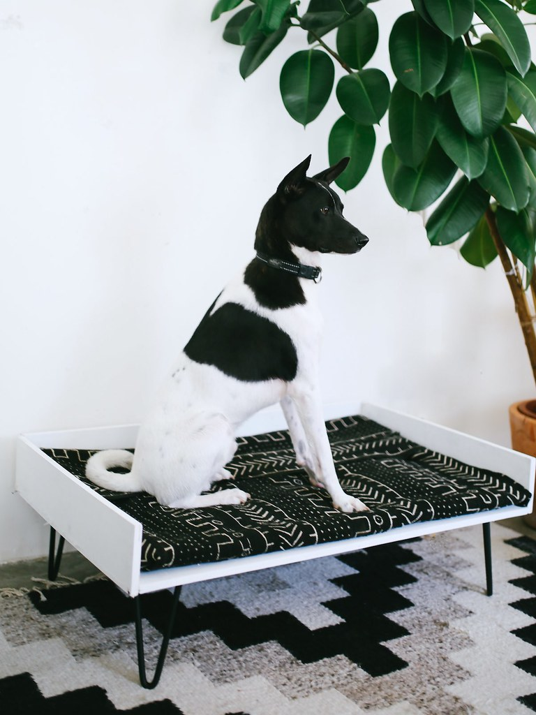 dog interiorsherpa balcony diy pet inspiration bed best ideas your for