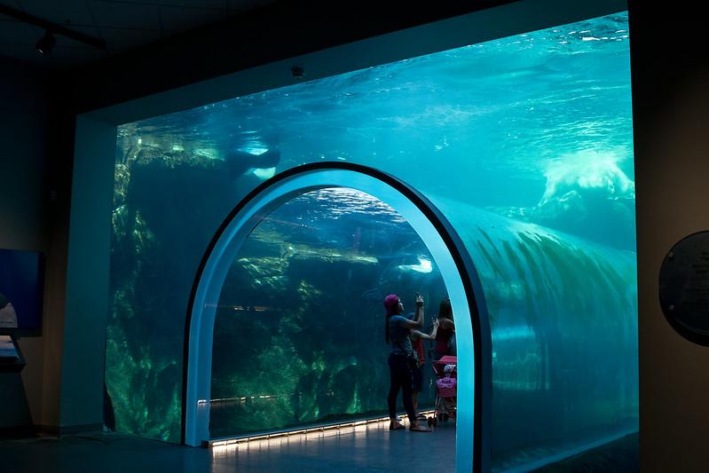 Underwater Passage, The Journey to Churchill at Assiniboine Zoo, Winnipeg, Manitoba | packmeto.com