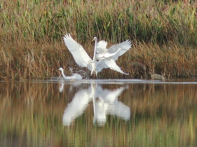 Heron encounter 3 20121217