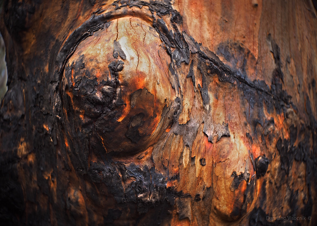 Scorched bark_c