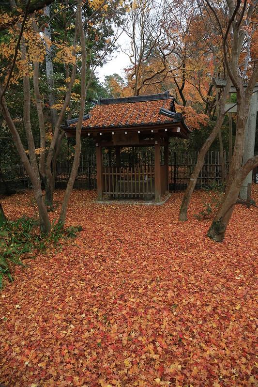 Autumn Renge-ji 蓮華寺