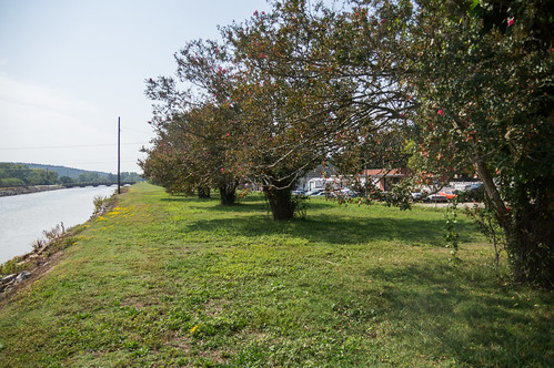 Lockhart Canal Crepe Myrtles - 1