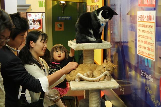 Nekebukuro Cat Cafe ikebukuro