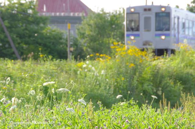 夏草の線路端