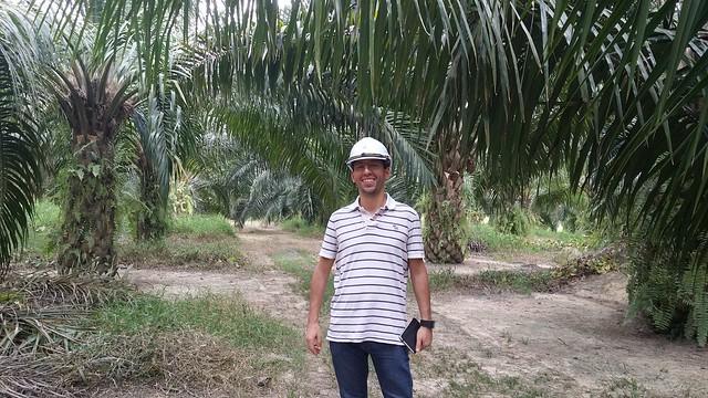 Olio di palma: quello che nessuno ti ha raccontato su salute, sostenibilità e filiera produttiva