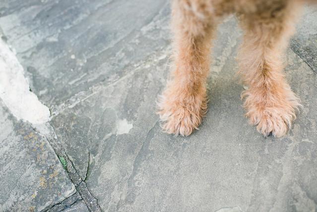 Fuzzy fur feet.