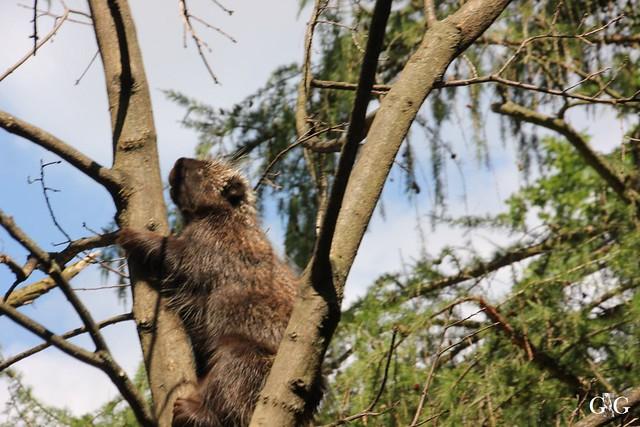 Besuch Tierpark Friedrichsfelde 20.07.201646
