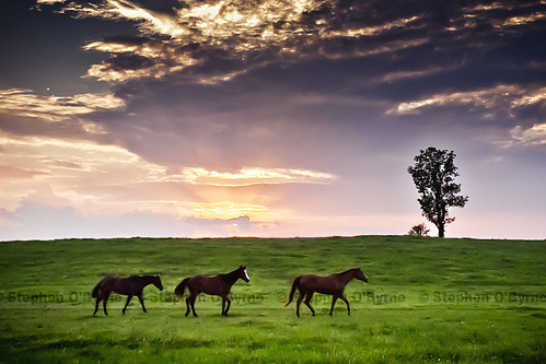 | Sunset and Horses | | by SOBPhotography