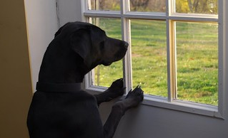 dog-window.jpg | by MuseForHire2010