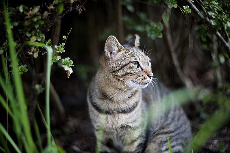 alley cat portrait