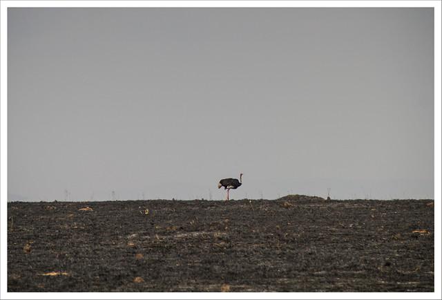 MasaiMara-162