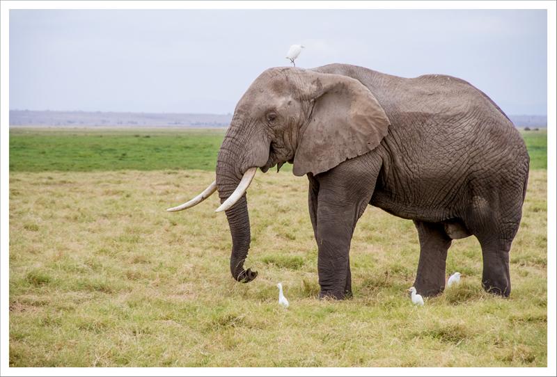Amboseli-64