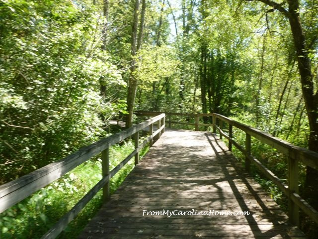 Oklawaha Greenway Walk