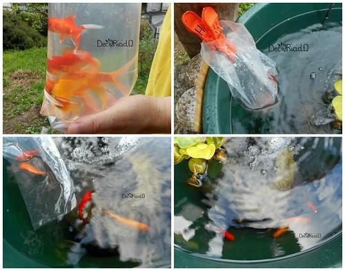 5. acclimatazione pesci