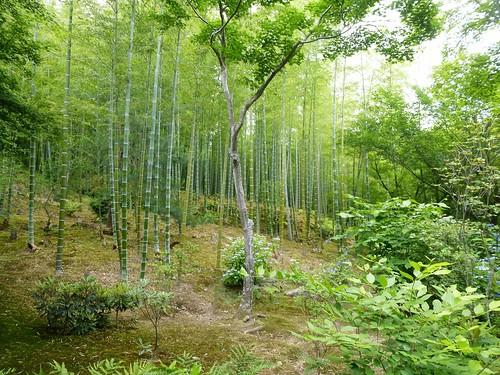 jp16-Kyoto-tenryu-ji-unesco (6)