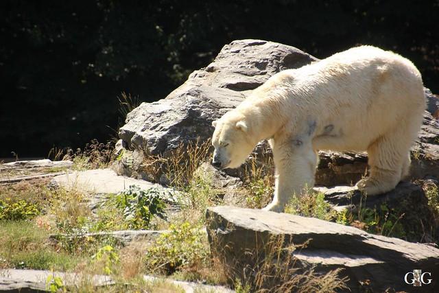 Besuch Tierpark Friedrichsfelde 07.08.16112