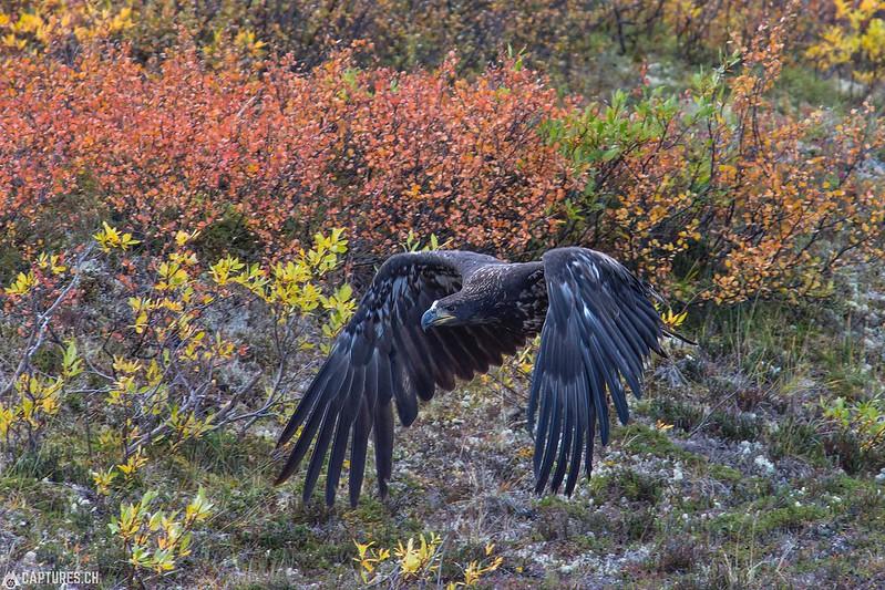 Eagle 1 - Denali Highway