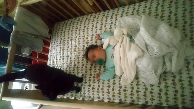 Cat in the Crib