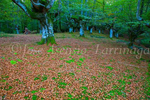 Parque Natural de #Gorbeia #DePaseoConLarri #Flickr      -1357
