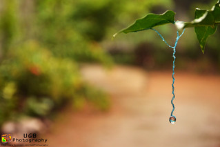 water drop | by URastaG