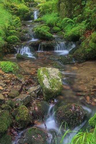 Parque Natural de #Gorbeia #DePaseoConLarri #Flickr - -914