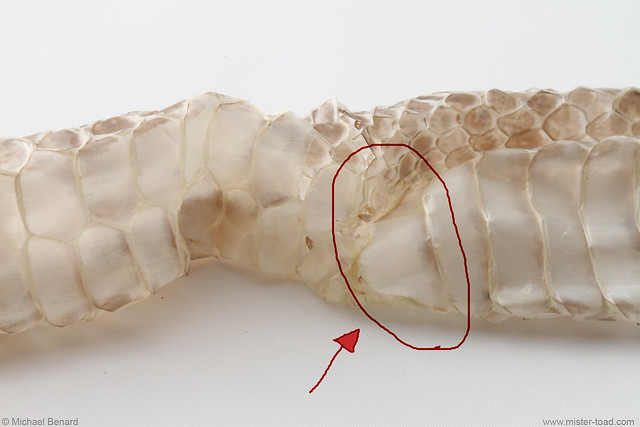 Shed with Anal Plate Highlighted