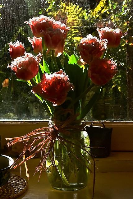 Morning sunlight on a vase of pink ruffled tulips.
