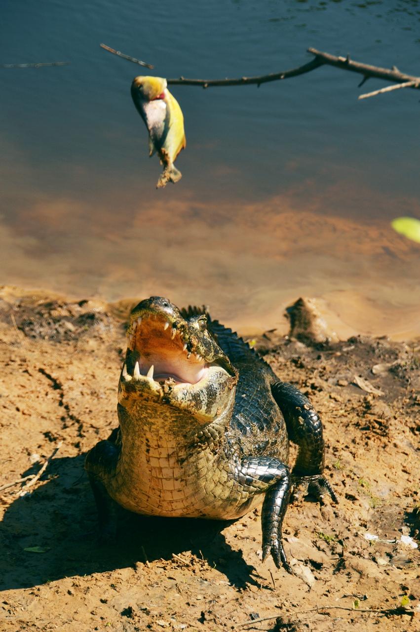 pantanal29