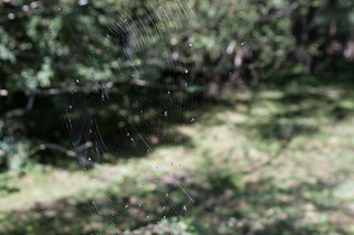 Spider's Web | by MissingPhoton1
