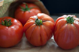beste Tomaten