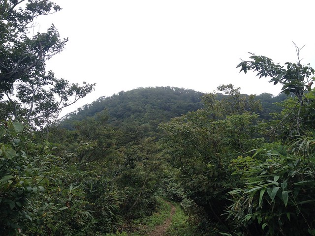 冠山 登山道