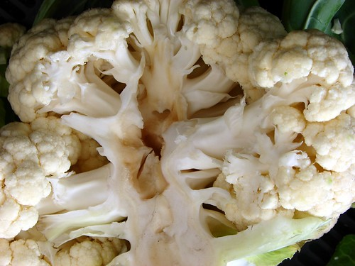 heart of the cauliflower | by Jenblossom