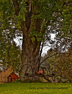Treasure Under the Old Tree | by Vicki Lund Photography