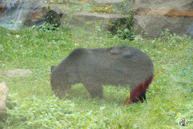 Tierpark Friedrichsfelde 25.09.161