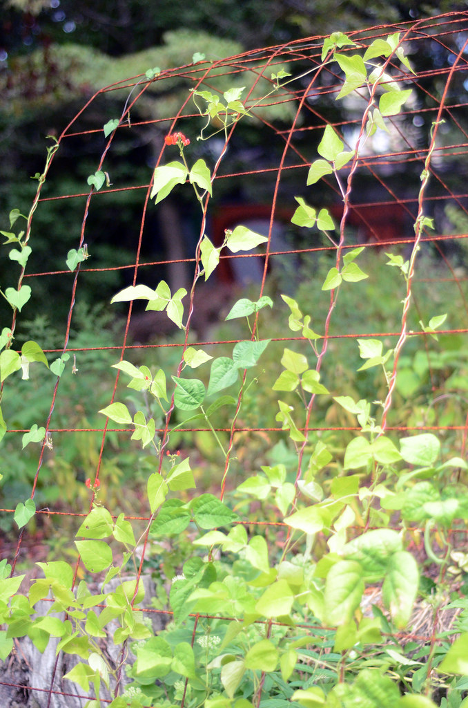 Home Garden: Aug 2016
