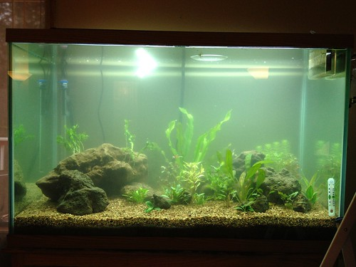 cloudy aquarium water causes solutions prevention