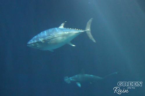 160703c Deep Sea _80