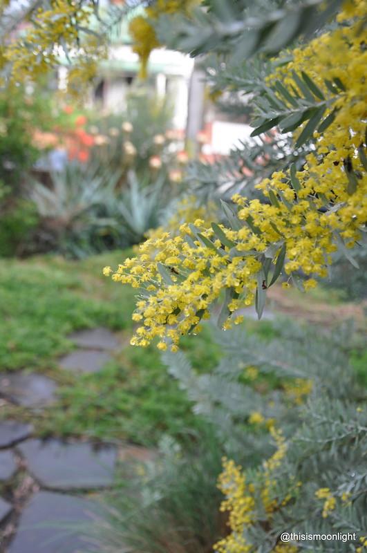 wildflowers16