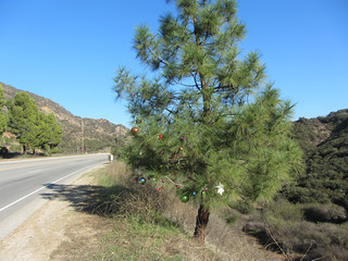 roadside tree | by hereinmalibu