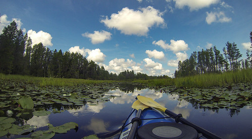 Lowcountry Unfiltered at Okefenokee-47