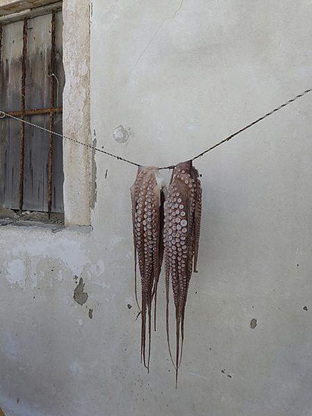 premiers poulpes suspendus