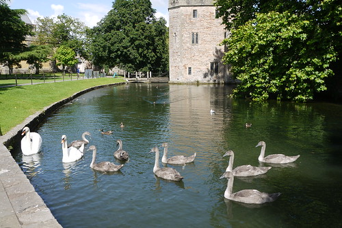 The Palace Swans