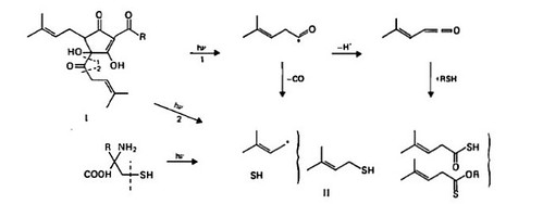 Bio-chemical pathway for sunstruck beer