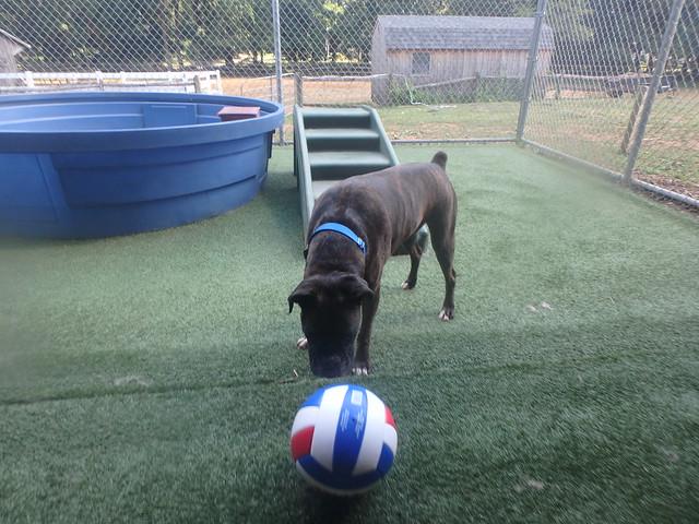 08_26_16 Soccer Playtime :-)