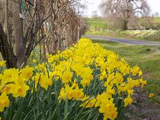 daffroad at Ironstone Winery | by teama2012